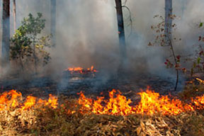 An active forest fire with billowing smoke